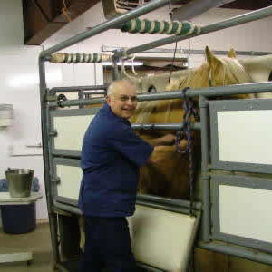 Upper Valley Veterinary in Rexburg takes care of large animals, including horses