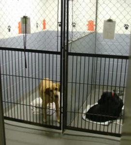 Pet boarding in Rexburg at Upper Valley Veterinary