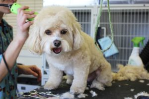 Pet grooming in Rexburg