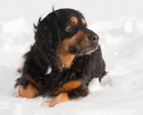 Caring For Your Pets in Winter