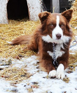 Dog Spay and Neuter in Rexburg