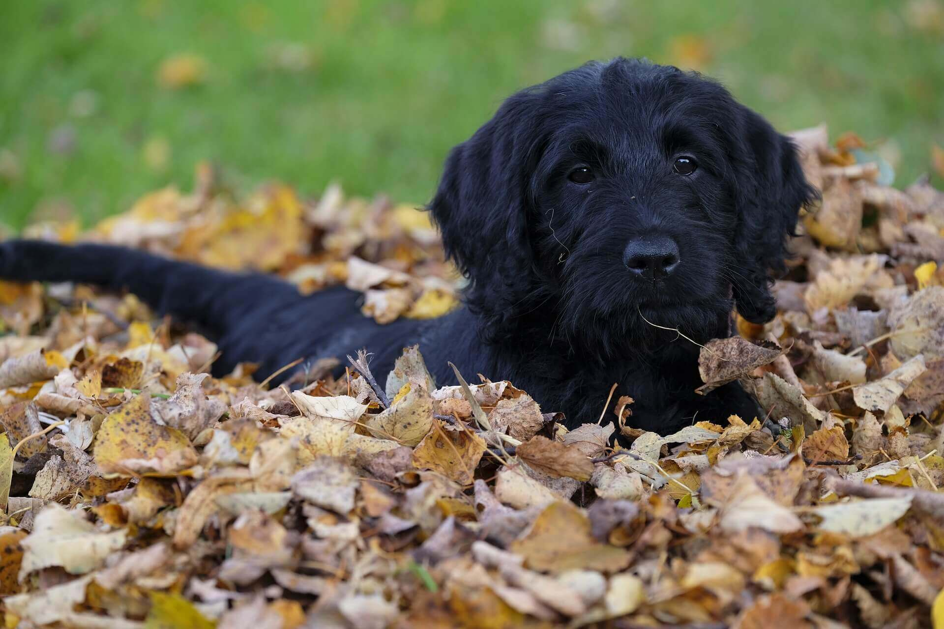 fall pet tips