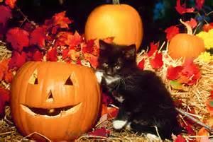 Cat at Halloween