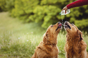 Two dogs drinking water