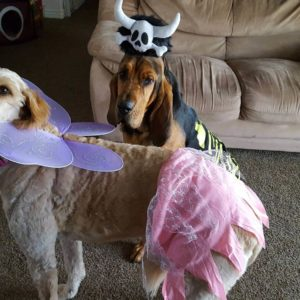 Rexburg Halloween pet costume contest 2016