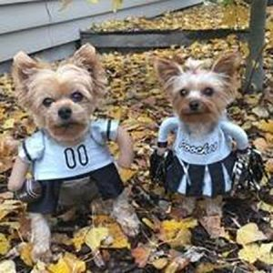 Dogs dressed as a football player and cheerleader for Halloween