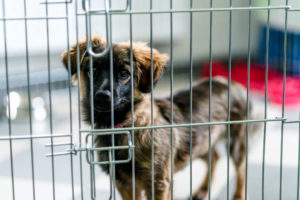 How to Prevent Kennel Cough in your pet