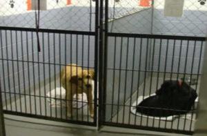 Pet boarding at Upper Valley Vet in Rexburg